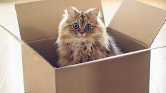 Кот Шредингера - знаменитый парадоксальный эксперимент