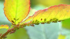 Как бороться с вредителями садовых культур