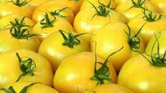 «Золотые яблоки»: лучшие сорта желтых томатов