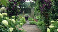 Как выбрать конструкцию и растения для садовой арки