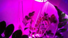 Лампы для комнатных цветов: для чего нужны, как применять и как выбрать