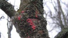 Болезни плодовых деревьев: 5 основных причин