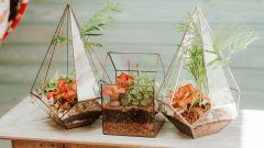 Как создать лиственную композицию во флорариуме