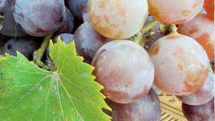 Виноградное вино - как приготовить