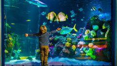 Как выбрать хороший аквариум
