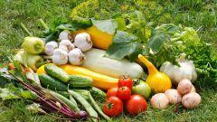 Как ухаживать за огородом в августе