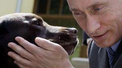 Какой породы собака у Путина?