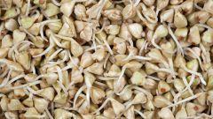 Как получить проростки семян