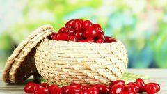 Кизил: полезные свойства и противопоказания