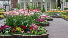 Клумбы и цветники: в чем разница между клумбой и цветником