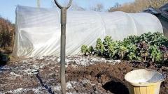 Как использовать соль в огороде
