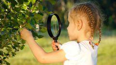 Процесс фотосинтеза: кратко и понятно и для детей