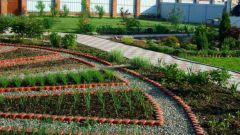 Декоративный огород на даче: мода, польза и эстетика