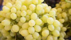 Лора (виноград): описание сорта