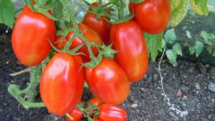 Чем подкормить помидоры в июле