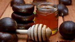 Мед каштановый: полезные свойства и противопоказания