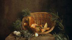 Гриб дождевик: как готовить из него вкусные блюда