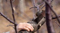 Как ухаживать за садовыми деревьями осенью