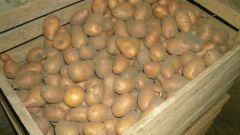 Как правильно хранить свежий картофель