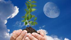 Насколько сильно влияние фаз луны на рост и развитие растений?