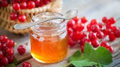 Калина с медом: рецепты от кашля