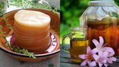 Чайный гриб: как вырастить в домашних условиях