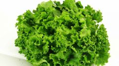Салат фризе: вкусно и полезно