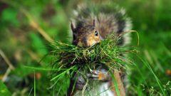 Автотрофы и гетеротрофы: их роль в экосистеме