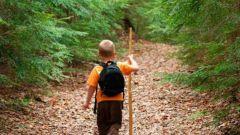 Что предпринимать, если заблудился в лесу