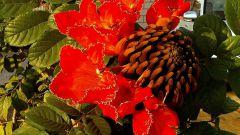 Тюльпановое дерево: как выглядит это дерево и где произрастает