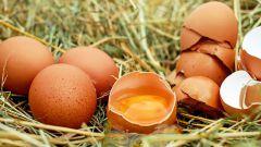 Как узнать свежесть яиц и как их правильно хранить