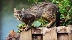 Коты: 22 удивительных факта