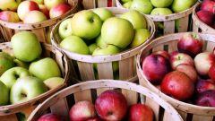 Как хранить яблоки: разные варианты