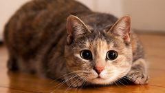 Кошка – сакральное животное