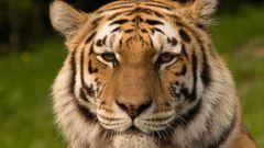 10 животных, которые могут исчезнуть в ближайшем будущем
