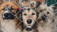 10 пород собак, которые чаще других оказываются на улице или в приюте