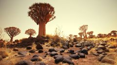 5 интересных фактов про Кению