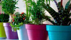 Как обеспечить влажность комнатным растениям на время отъезда