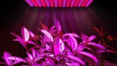 5 фактов о фитосветильниках или как выбрать фитолампу для подсветки растений