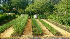 Как и зачем производить мульчирование почвы