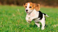 Как приучить щенка к туалету на улице?