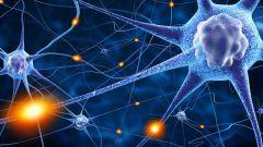 Нервная ткань: строение и функции