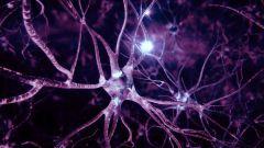 Синапс: что это такое, строение синапса