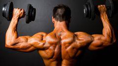 Основные группы мышц человека: описание, строение