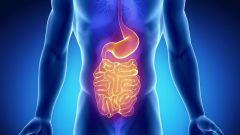 Строение и функции желудка человека