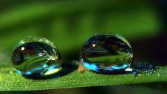 Как две капли воды: значение