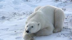 Как живут животные в холодных районах