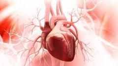 Сердечные клапаны: описание, строение, функции