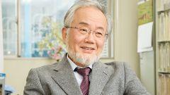 Осуми Ёсинори: биография, карьера, личная жизнь