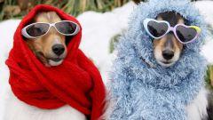 Как ухаживать за домашними животными зимой